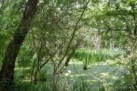 Резервата Балтата