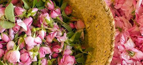 Празник на розата и минералната вода